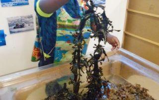 Seaweed Fun