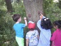 Forest Visit